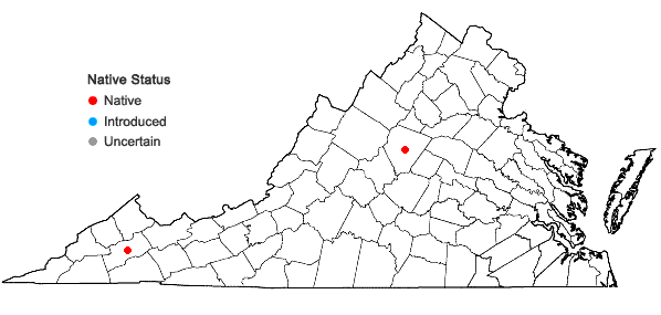 Locations ofPhilonotis gracillima Ångström in Virginia