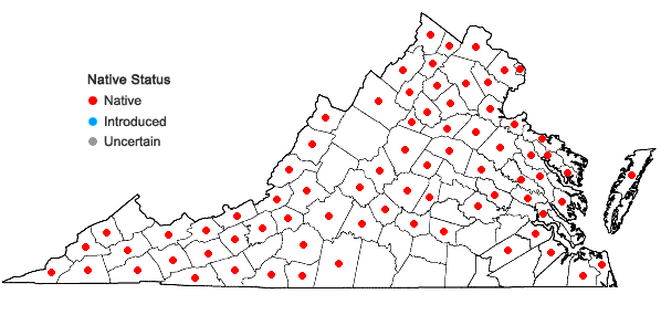 Locations ofPhlox paniculata L. in Virginia