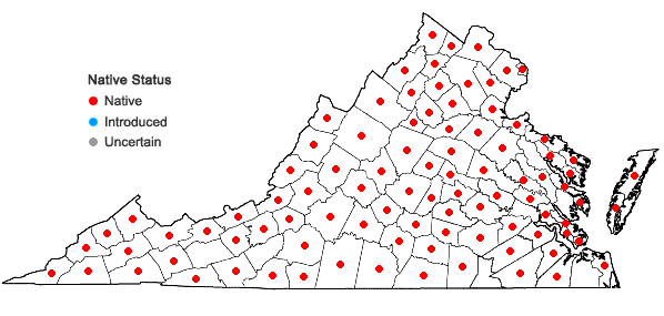 Locations ofPhryma leptostachya L. var. leptostachya in Virginia