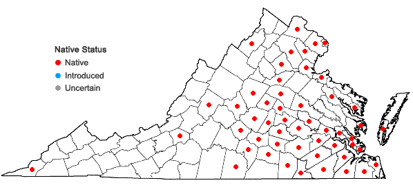 Locations ofPhyllanthus caroliniensis Walt. ssp. caroliniensis in Virginia