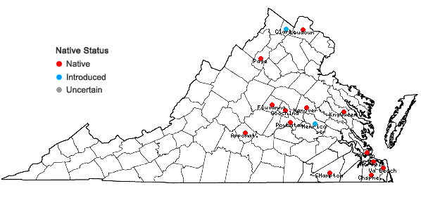 Locations ofPhysalis angulata L. in Virginia