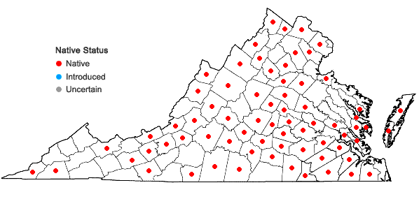 Locations ofPhysalis heterophylla Nees in Virginia