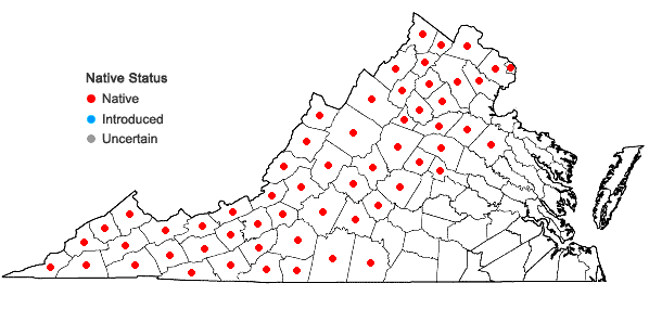 Locations ofPinus rigida Miller in Virginia