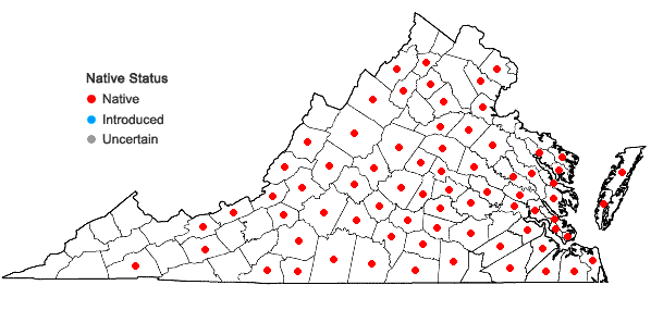 Locations ofPiptochaetium avenaceum (L.) Parodi in Virginia