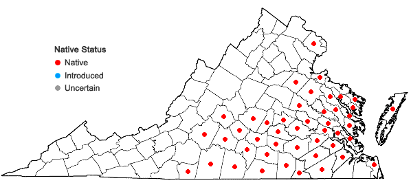 Locations ofPityopsis aspera (Shuttlw. ex Small) Small var. adenolepis (Fern.) Semple & Bowers in Virginia