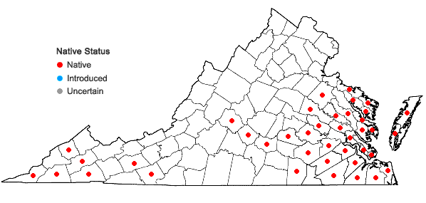 Locations ofPityopsis graminifolia (Michx.) Nutt. var. latifolia (Fern.) Semple & Bowers in Virginia