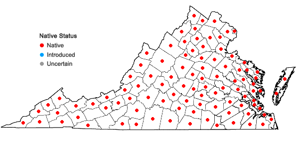 Locations ofPlantago rugelii Dcne. in Virginia