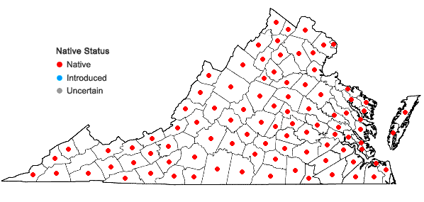 Locations ofPlatanthera clavellata (Michx.) Luer in Virginia