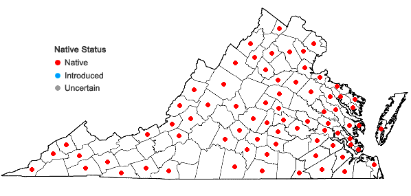 Locations ofPlatygyrium repens (Brid.) Schimp. in Virginia