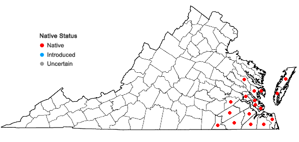Locations ofPluchea foetida (L.) DC. var. foetida in Virginia