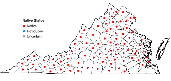 Locations ofPoa cuspidata Nutt. in Virginia
