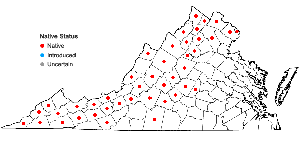 Locations ofPolymnia canadensis L. in Virginia