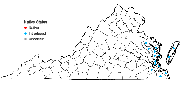 Locations ofPolypogon monspeliensis (L.) Desf. in Virginia