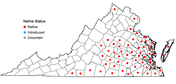 Locations ofPolypremum procumbens L. in Virginia