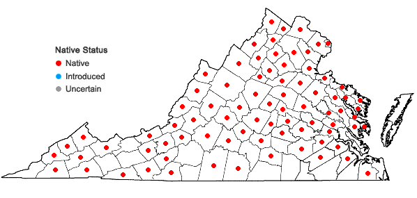 Locations ofPopulus grandidentata Michx. in Virginia