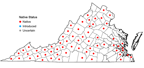 Locations ofPorella platyphylla (L.) Pfeiffer in Virginia