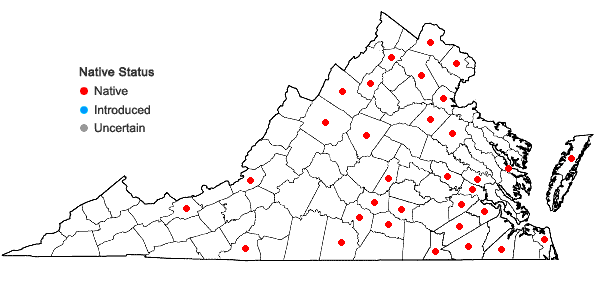 Locations ofPotamogeton pulcher Tuckerman in Virginia