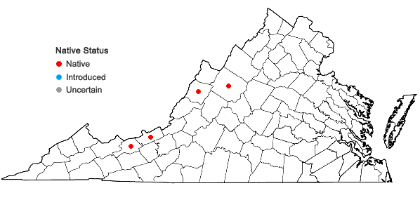 Locations ofPotamogeton tennesseensis Fernald in Virginia