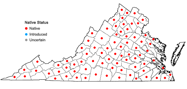 Locations ofPotentilla norvegica L. in Virginia