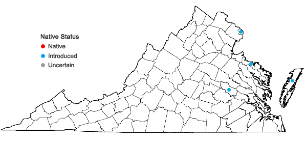 Locations ofProboscidea louisianica (P. Miller) Thellung in Virginia