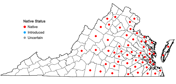 Locations ofProserpinaca palustris L. in Virginia