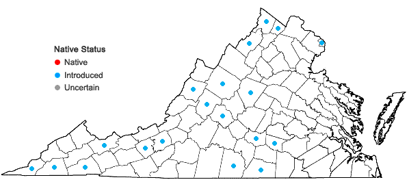 Locations ofPrunus mahaleb L. in Virginia