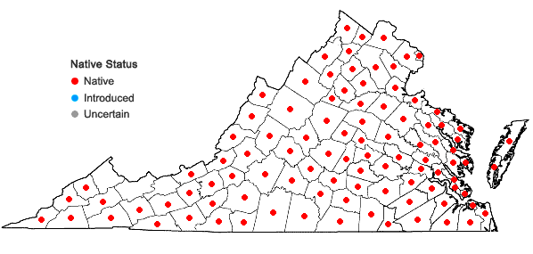 Locations ofPseudognaphalium obtusifolium (L.) Hilliard & Burtt in Virginia
