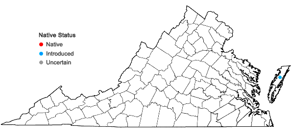 Locations ofPuccinellia distans (Jacq.) Parl. ssp. distans in Virginia