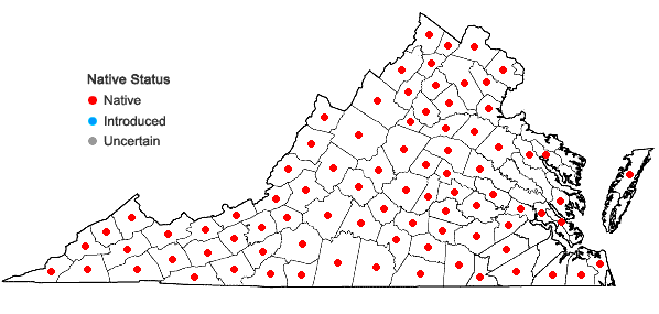 Locations ofPycnanthemum incanum (L.) Michx. var. incanum in Virginia