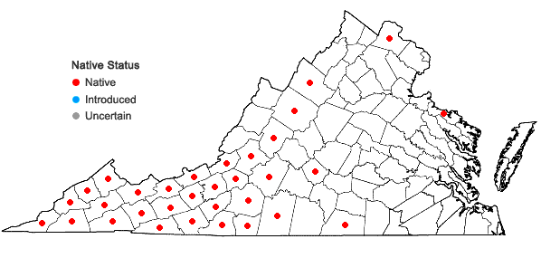 Locations ofPyrularia pubera Michx. in Virginia