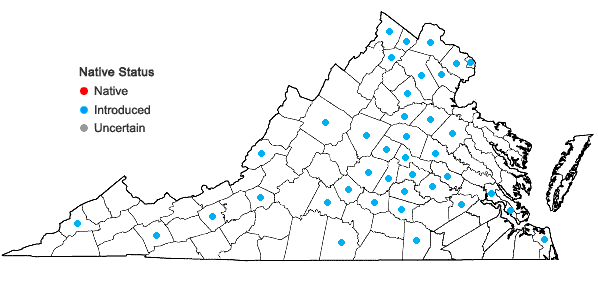 Locations ofPyrus calleryana Dcne. in Virginia