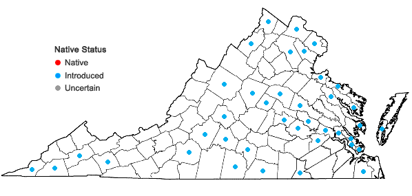 Locations ofPyrus communis L. in Virginia