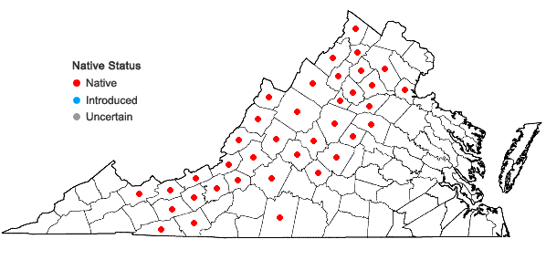 Locations ofQuercus ilicifolia Wangenheim in Virginia