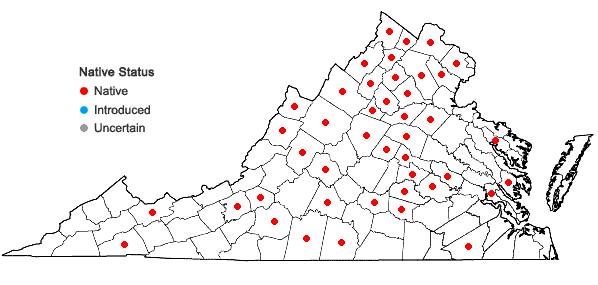 Locations ofQuercus imbricaria Michaux in Virginia