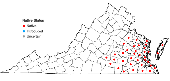 Locations ofQuercus nigra Linnaeus in Virginia
