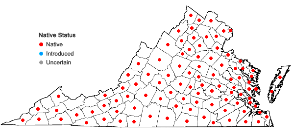 Locations ofQuercus stellata Wangenheim in Virginia