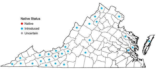 Locations ofRanunculus acris L. in Virginia