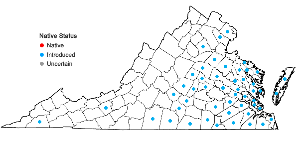 Locations ofRanunculus parviflorus L. in Virginia