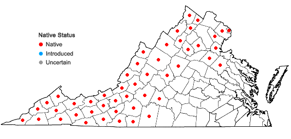 Locations ofRhododendron maximum L. in Virginia