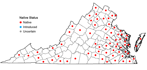 Locations ofRhododendron viscosum (L.) Torr. in Virginia