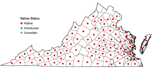 Locations ofRhynchospora capitellata (Michaux) Vahl in Virginia