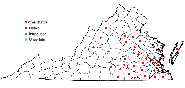 Locations ofRhynchospora chalarocephala Fernald and Gale in Virginia