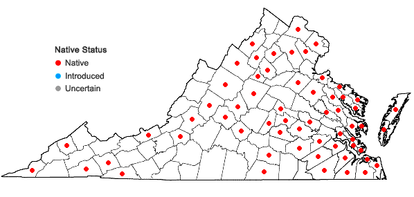 Locations ofRhynchostegium serrulatum (Hedw.) A. Jaeger in Virginia