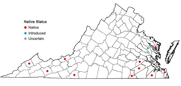 Locations ofRiccardia palmata (Hedw.) Carruth. in Virginia