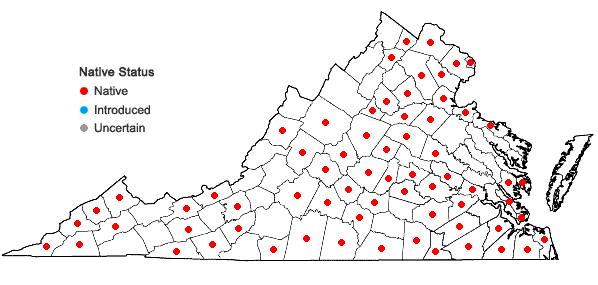Locations ofRorippa palustris (L.) Besser ssp. fernaldiana (Butters & Abbe) Jonsell in Virginia