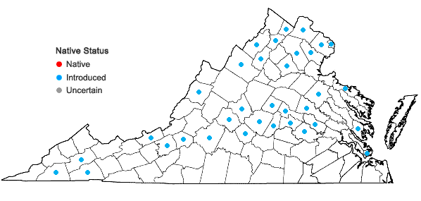 Locations ofRorippa sylvestris (Linnaeus) Besser in Virginia