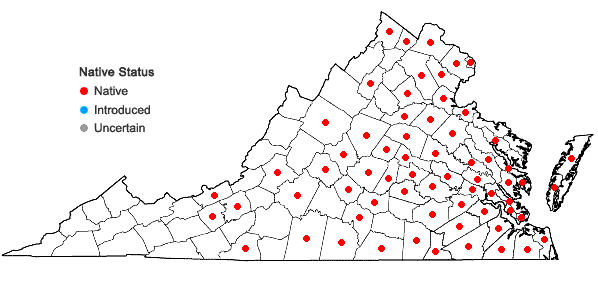 Locations ofRotala ramosior (L.) Koehne in Virginia