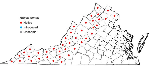 Locations ofRubus odoratus L. in Virginia