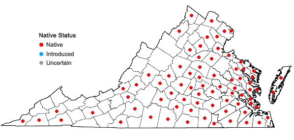 Locations ofRuellia caroliniensis (Gmelin) Steudel in Virginia