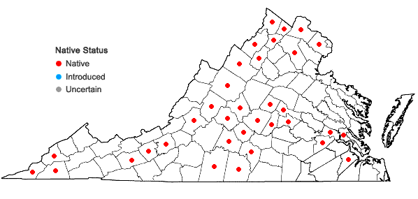 Locations ofRuellia strepens L. in Virginia